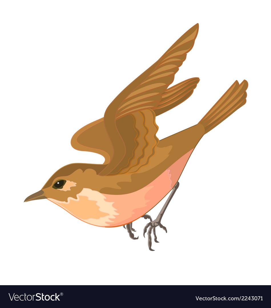 0range-bird vector | Price: 1 Credit (USD $1)