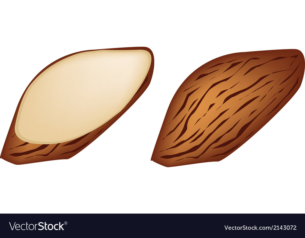 Whole and slice almonds on white background vector | Price: 1 Credit (USD $1)