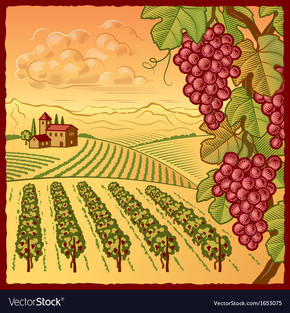 Vineyard landscape vector | Price: 1 Credit (USD $1)