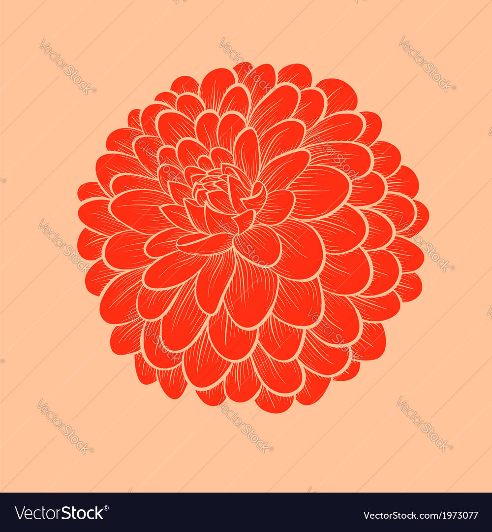 Flower dahlia drawn in graphical style vector | Price: 1 Credit (USD $1)