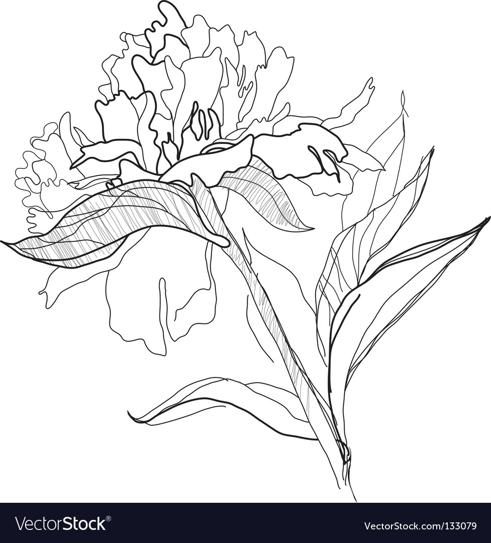 Drawing peony vector | Price: 1 Credit (USD $1)