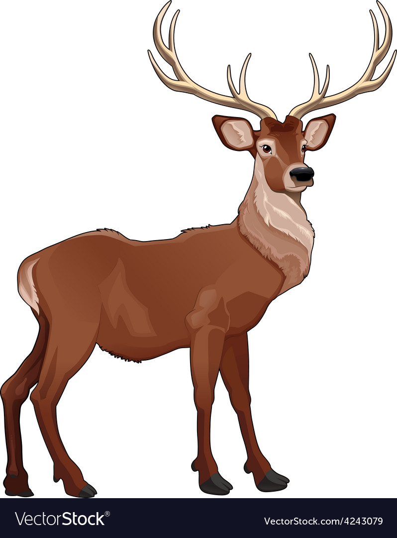 Elegant deer vector | Price: 1 Credit (USD $1)