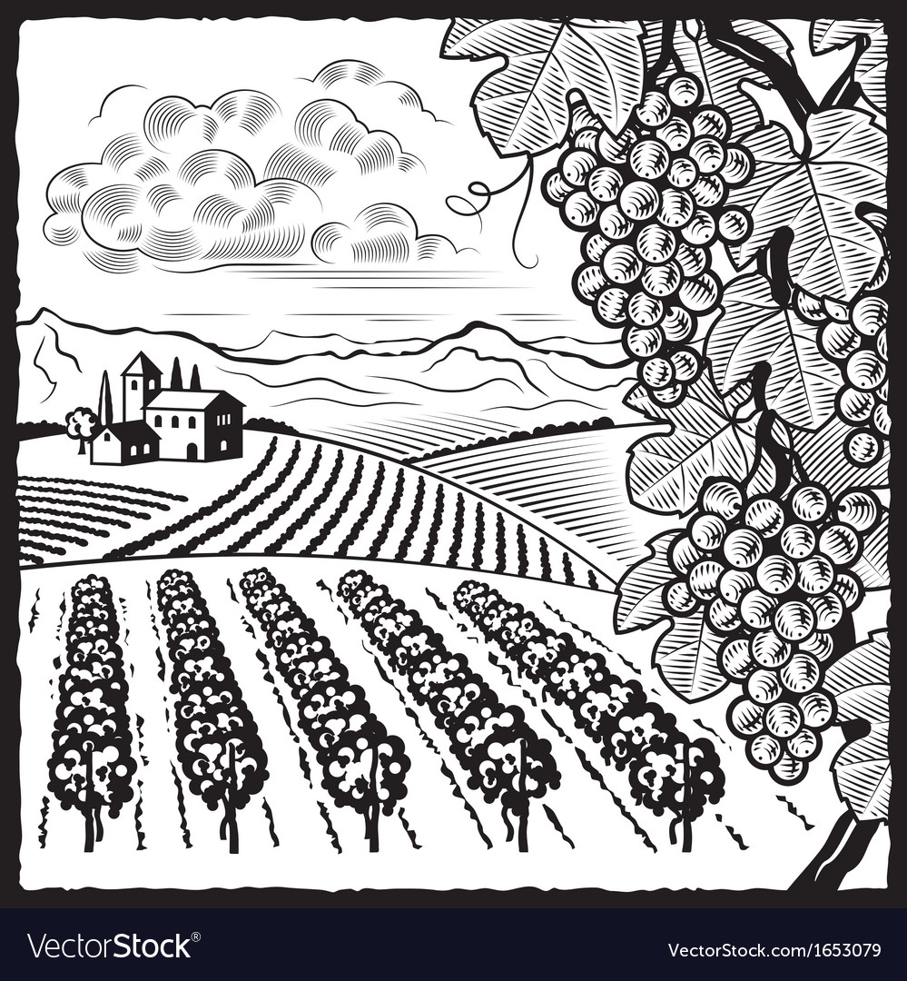 Vineyard landscape black and white vector | Price: 1 Credit (USD $1)
