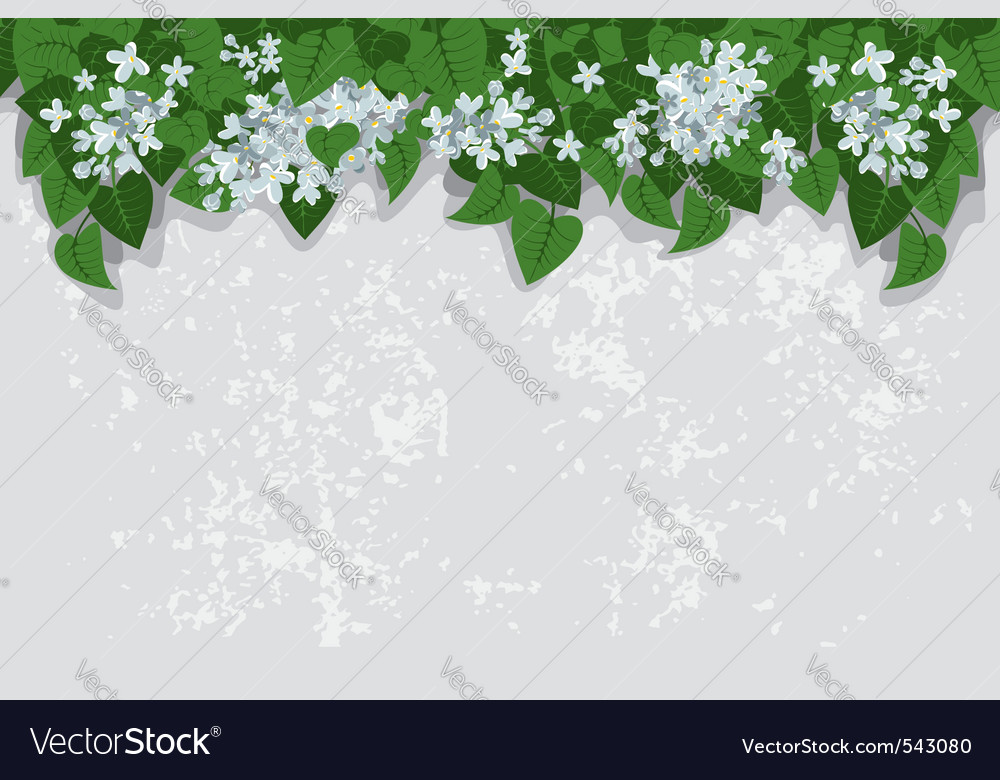 Grunge background with white lilacs detailed vecto vector | Price: 1 Credit (USD $1)