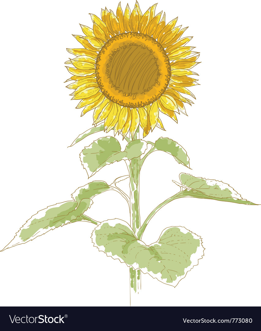 Hand-drawing sunflower vector | Price: 1 Credit (USD $1)