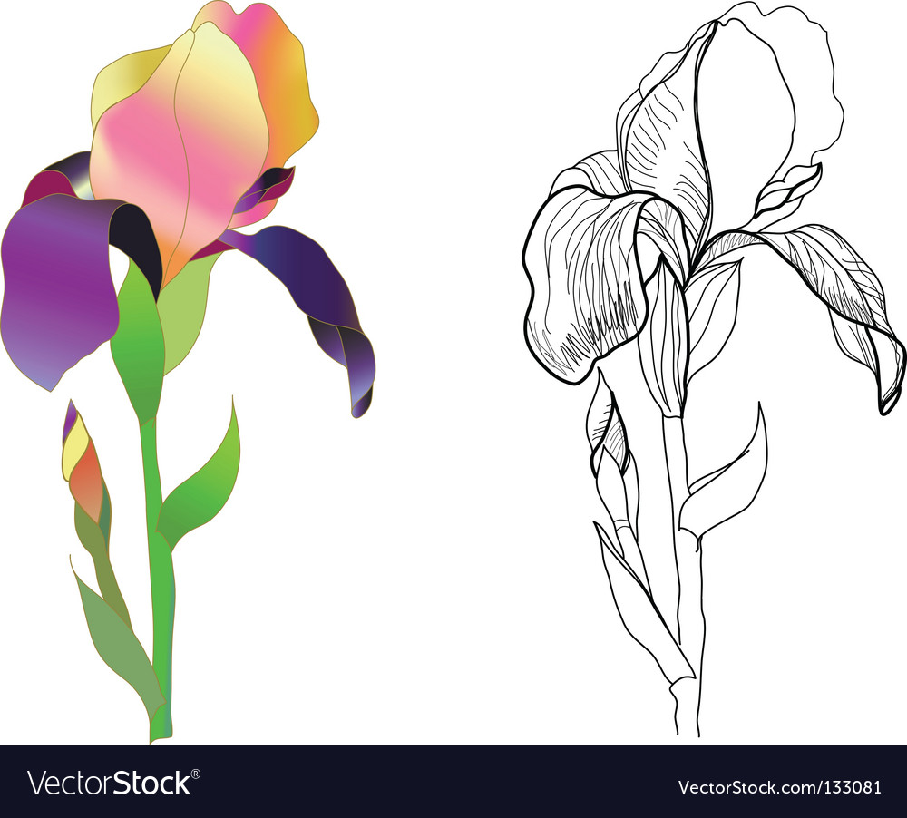 Iris monochrome vector | Price: 1 Credit (USD $1)