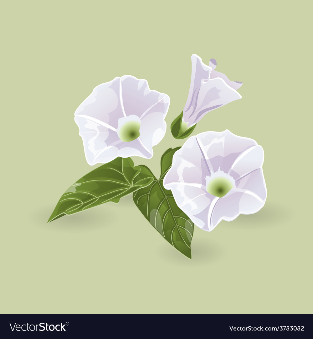 Delicate purple flowers vector | Price: 1 Credit (USD $1)
