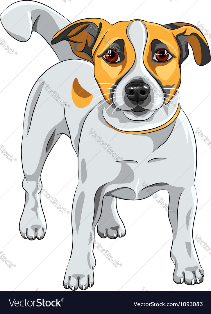 Dog jack russell terrier vector | Price: 3 Credit (USD $3)