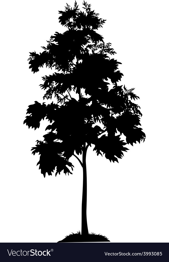 Acacia tree and grass silhouette vector | Price: 1 Credit (USD $1)