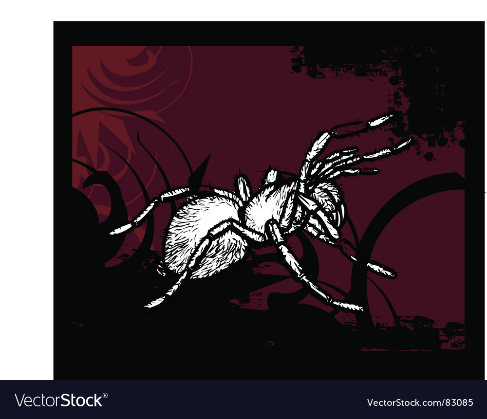 Spider illustration vector | Price: 1 Credit (USD $1)