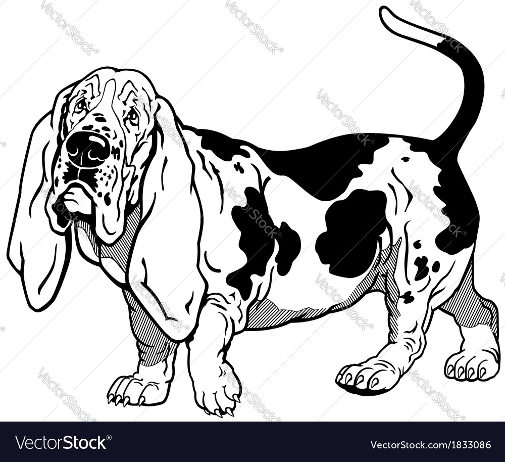 Basset hound black white vector | Price: 1 Credit (USD $1)