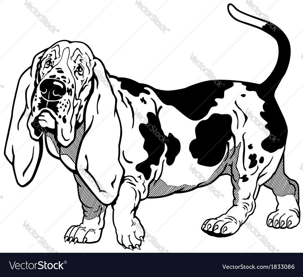 Basset hound black white vector | Price: 1 Credit (USD $1)
