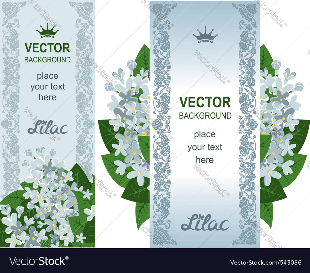 Two vertical banners with white lilacs vector | Price: 1 Credit (USD $1)