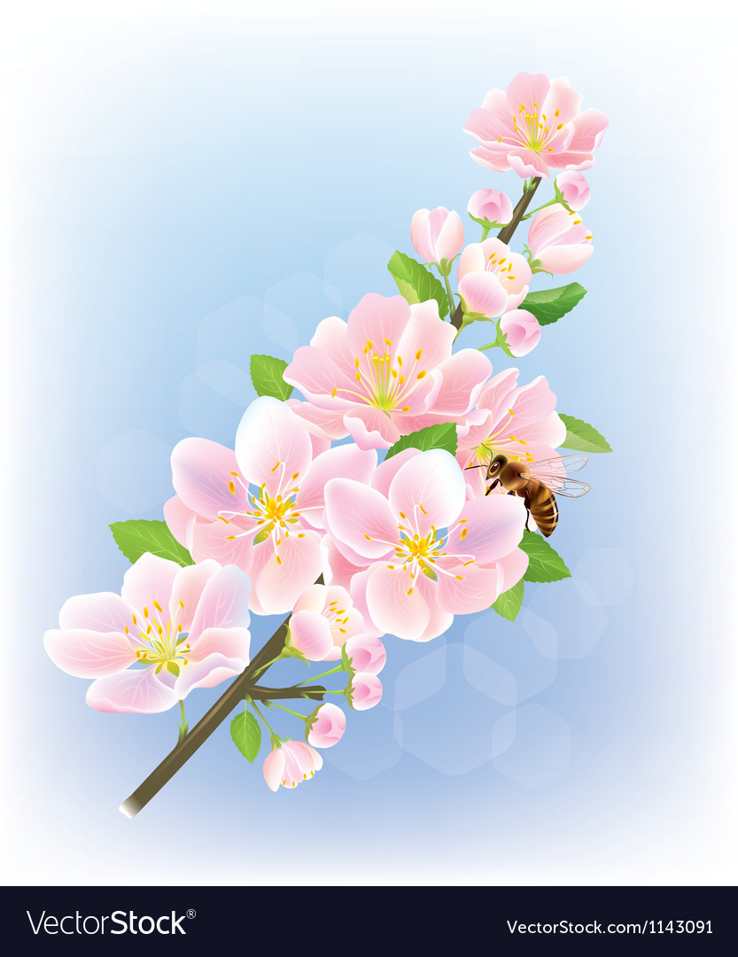 Blooming branch vector | Price: 1 Credit (USD $1)