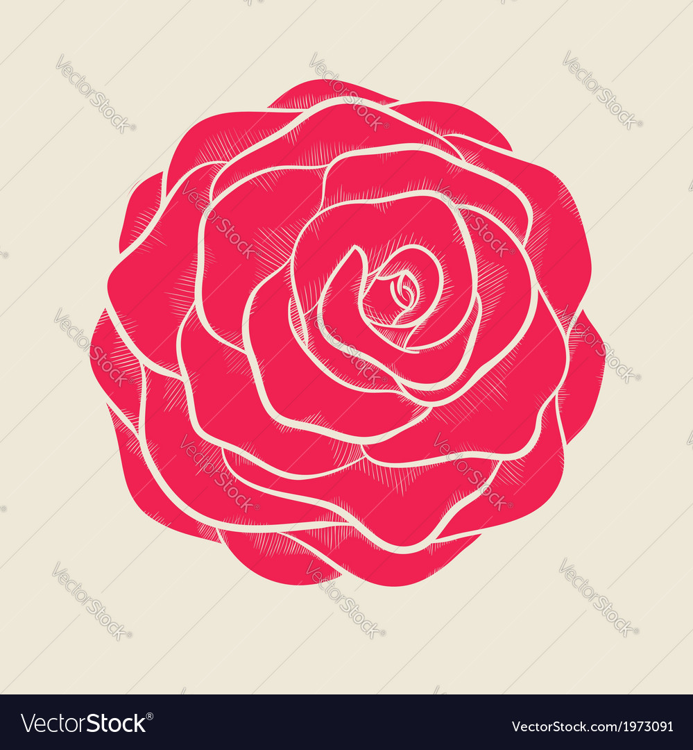 Pink rose in a hand-drawn graphic style vector | Price: 1 Credit (USD $1)