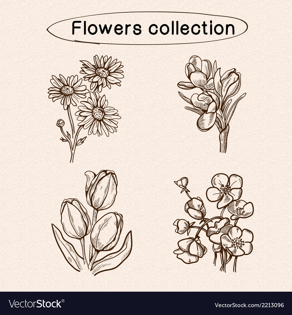 Flowers sketch elements vector | Price: 1 Credit (USD $1)