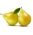 Fresh pears isolated on white vector