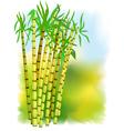 Plant of sugar cane vector