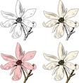 Flower anise magnolia vector