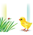 Grass and baby chick background vector