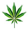 Green hemp leaf or cannabis leaf vector
