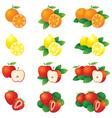 Orange lemon apple strawberry vector