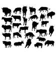 Bull cow vector