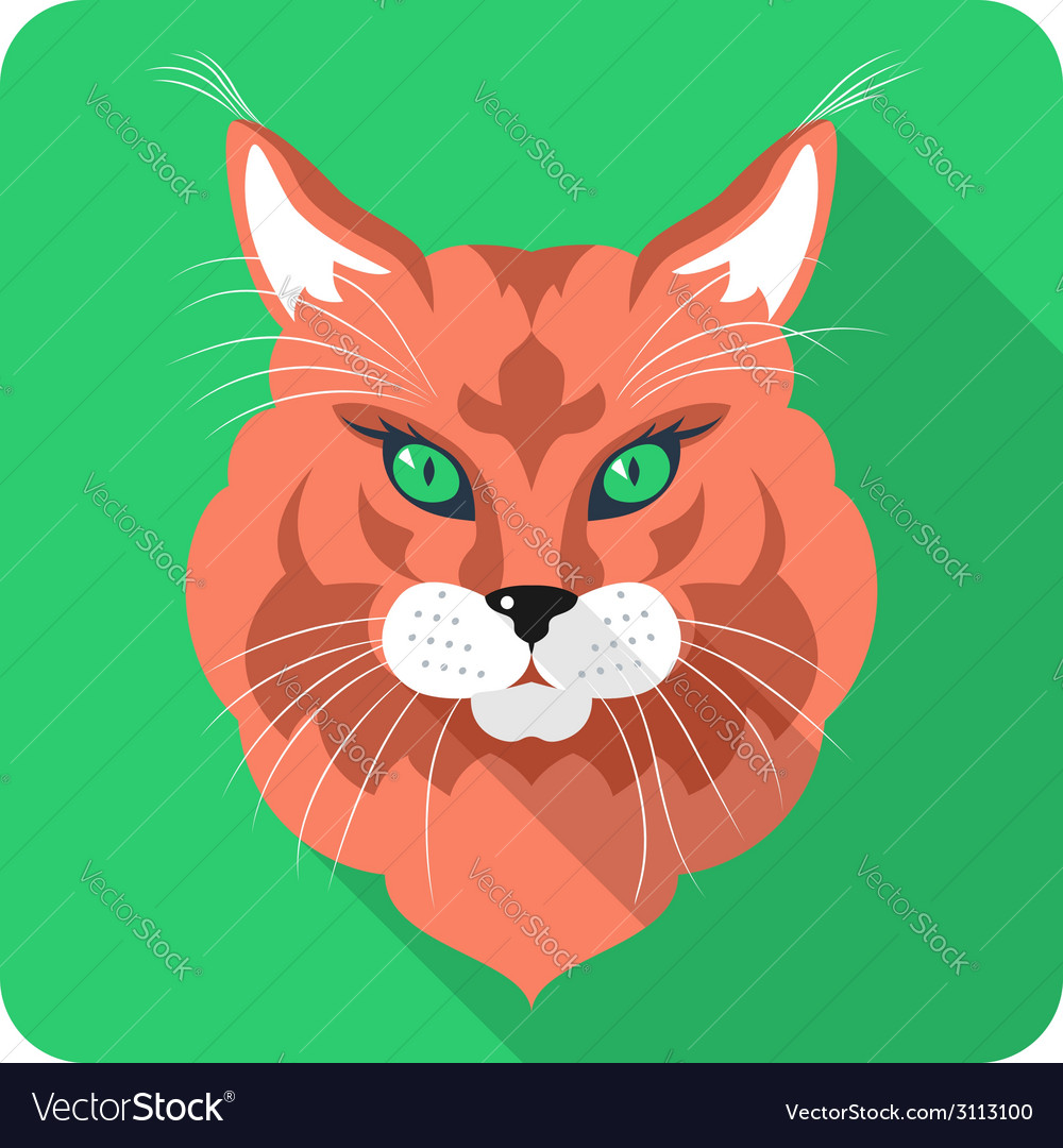 Cat maine coon icon flat design vector | Price: 1 Credit (USD $1)