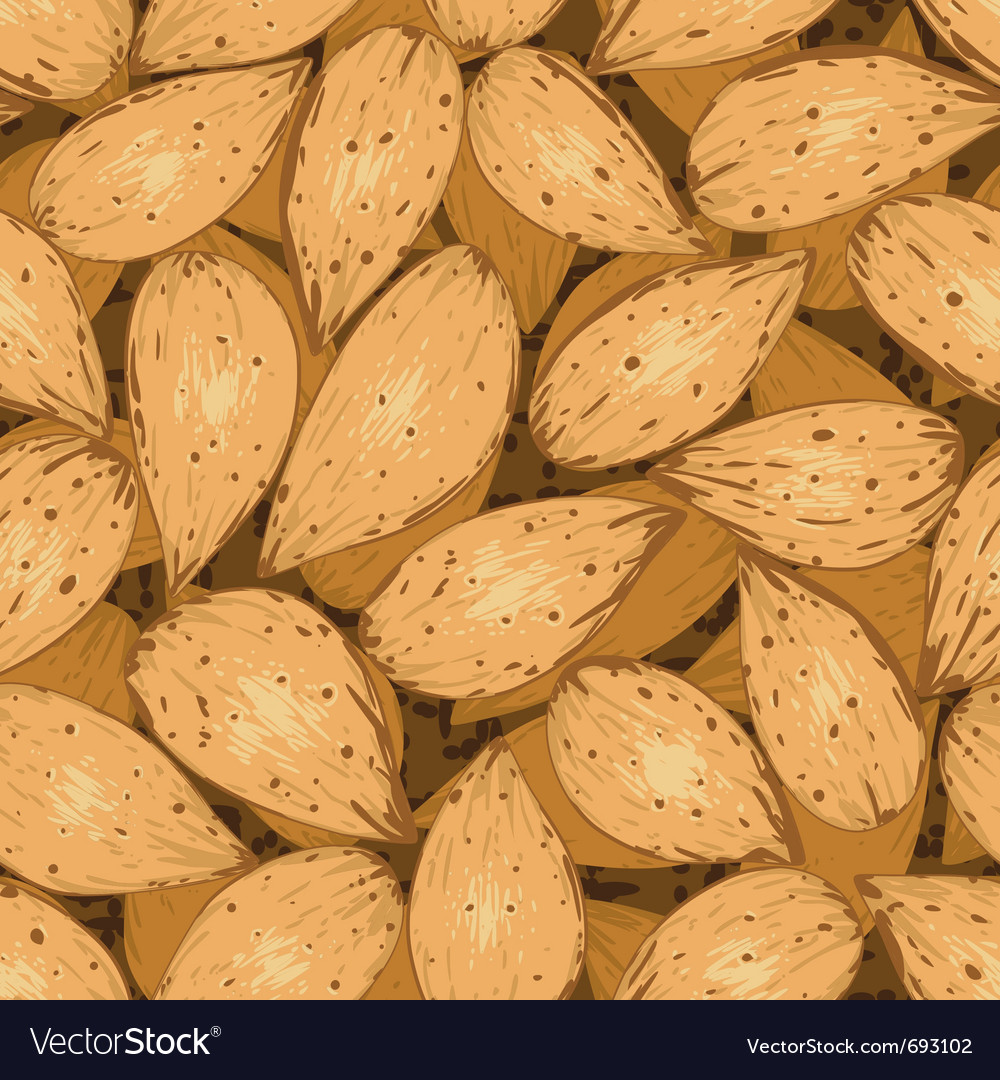 Shelled almonds vector | Price: 1 Credit (USD $1)
