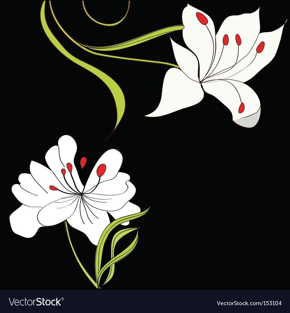 Black background with white flowers vector | Price: 1 Credit (USD $1)