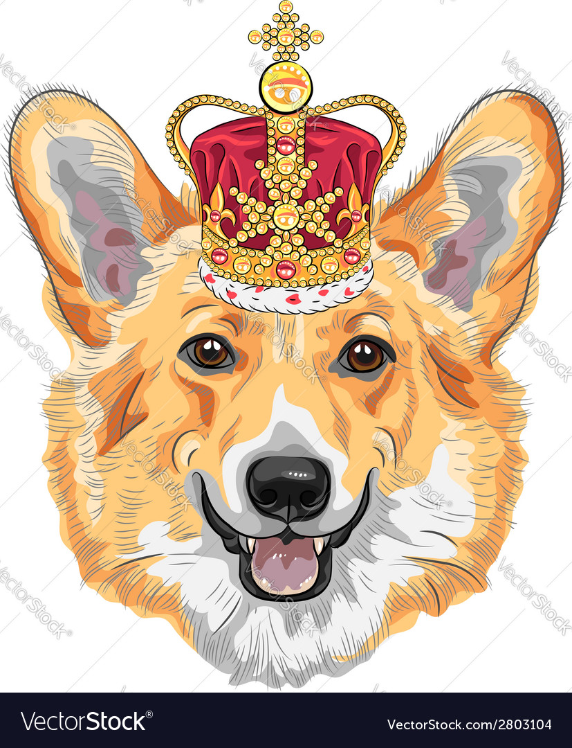 Dog pembroke welsh corgi breed in gold crown vector | Price: 1 Credit (USD $1)