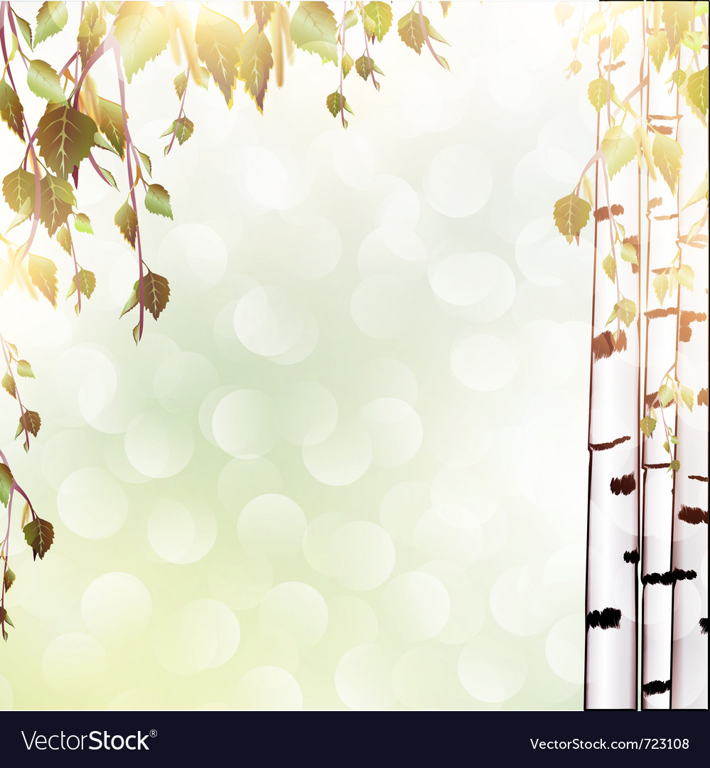 Summer background with birch vector   Price: 1 Credit (USD $1)