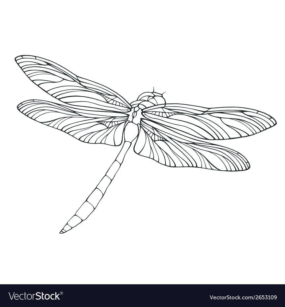 Outline dragonfly isolated on white vector | Price: 1 Credit (USD $1)