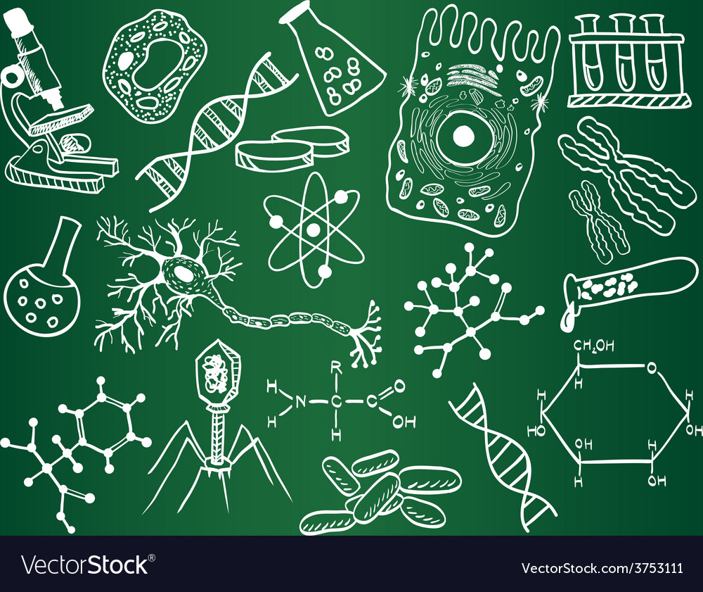 Biology sketches on school board vector | Price: 1 Credit (USD $1)