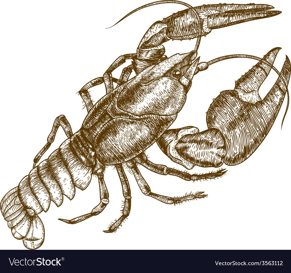 Engraving crayfish vector | Price: 3 Credit (USD $3)