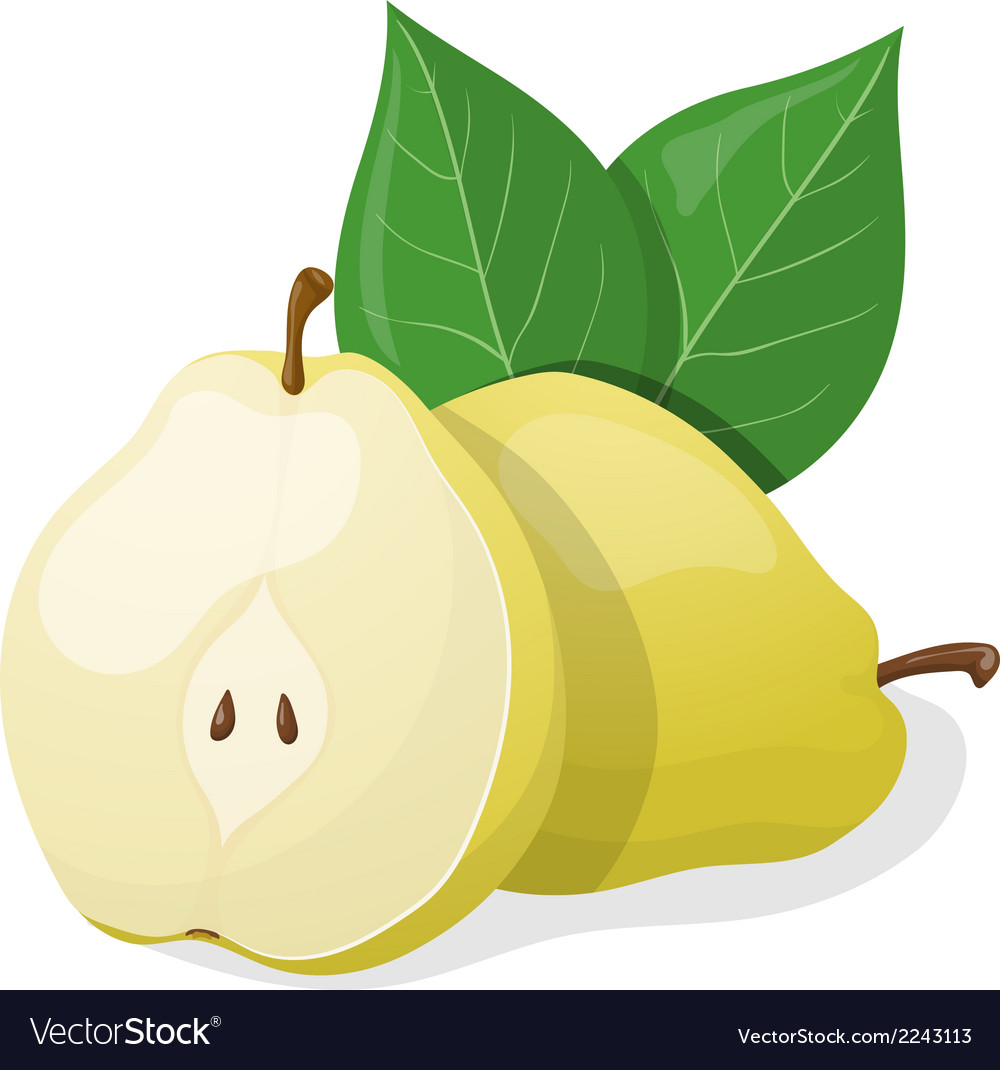 One pear and half of pear vector | Price: 1 Credit (USD $1)