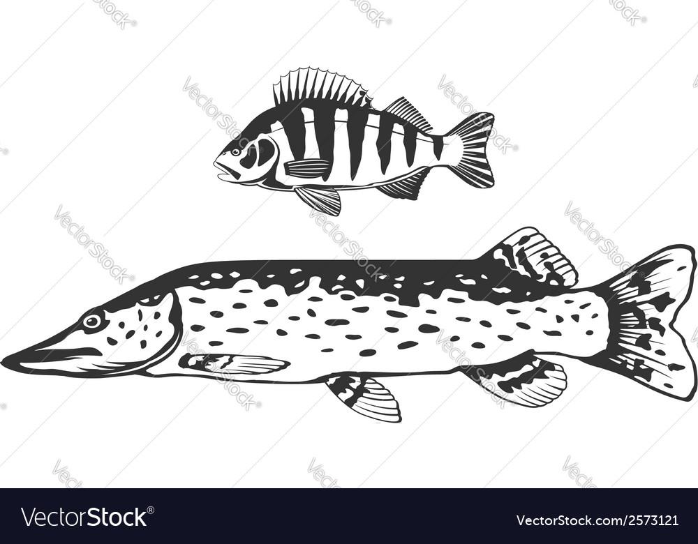 Fish predators set vector | Price: 1 Credit (USD $1)