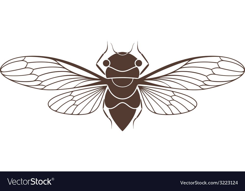 Cicada vector | Price: 1 Credit (USD $1)