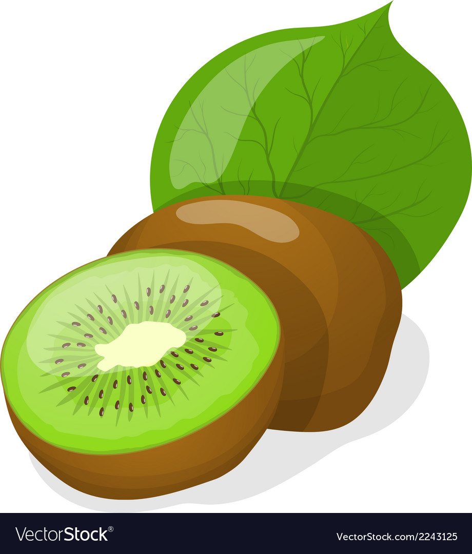 Isolated kiwi fruits vector | Price: 1 Credit (USD $1)