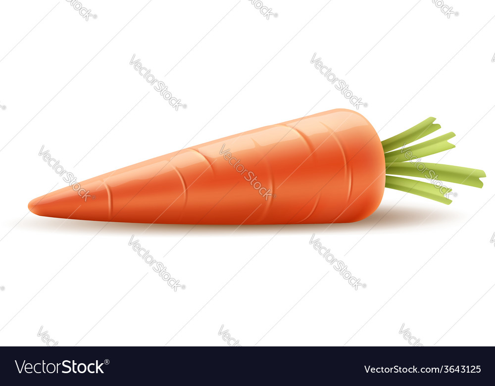 Red carrot organic vegetable vector | Price: 3 Credit (USD $3)