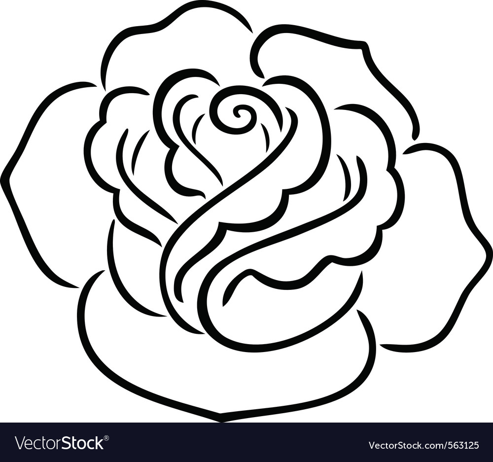 Rose contour vector | Price: 1 Credit (USD $1)