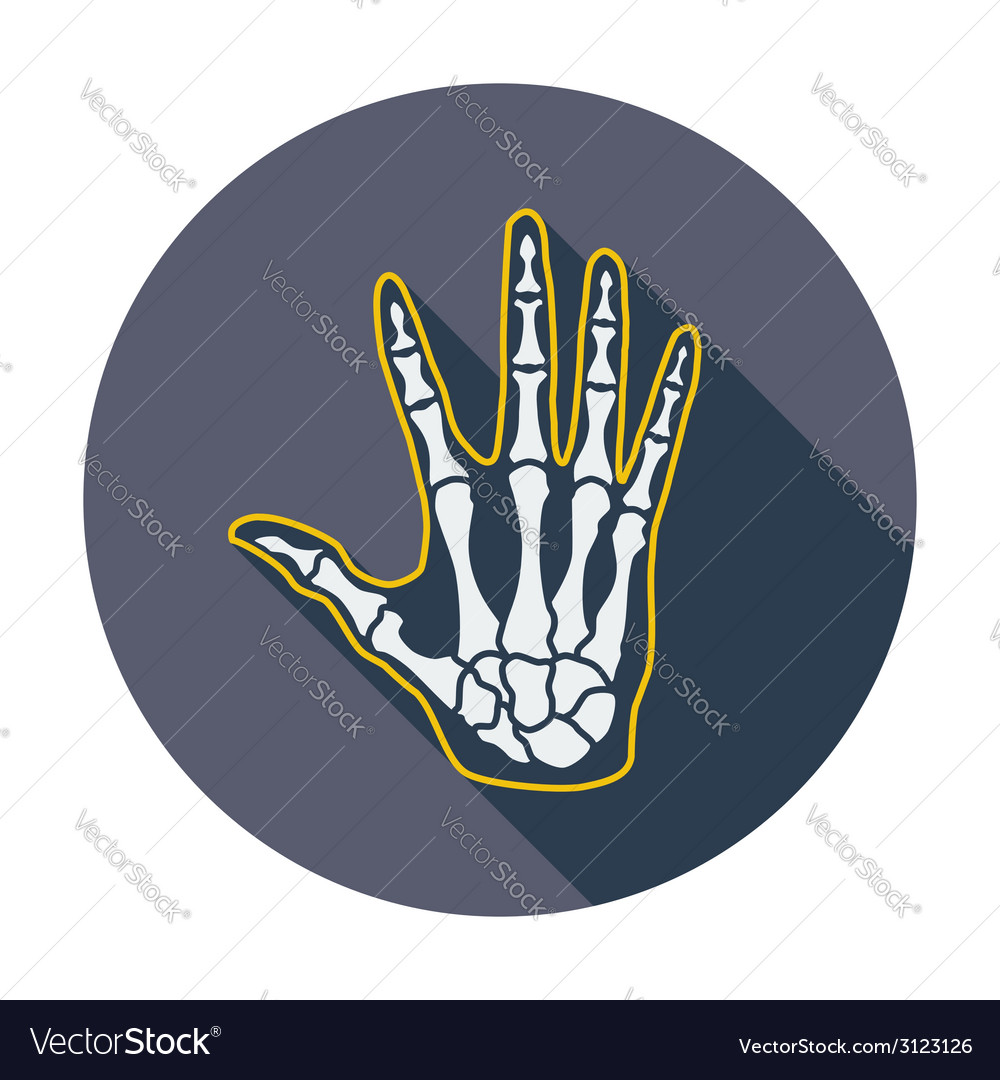 Anatomy hand vector | Price: 1 Credit (USD $1)