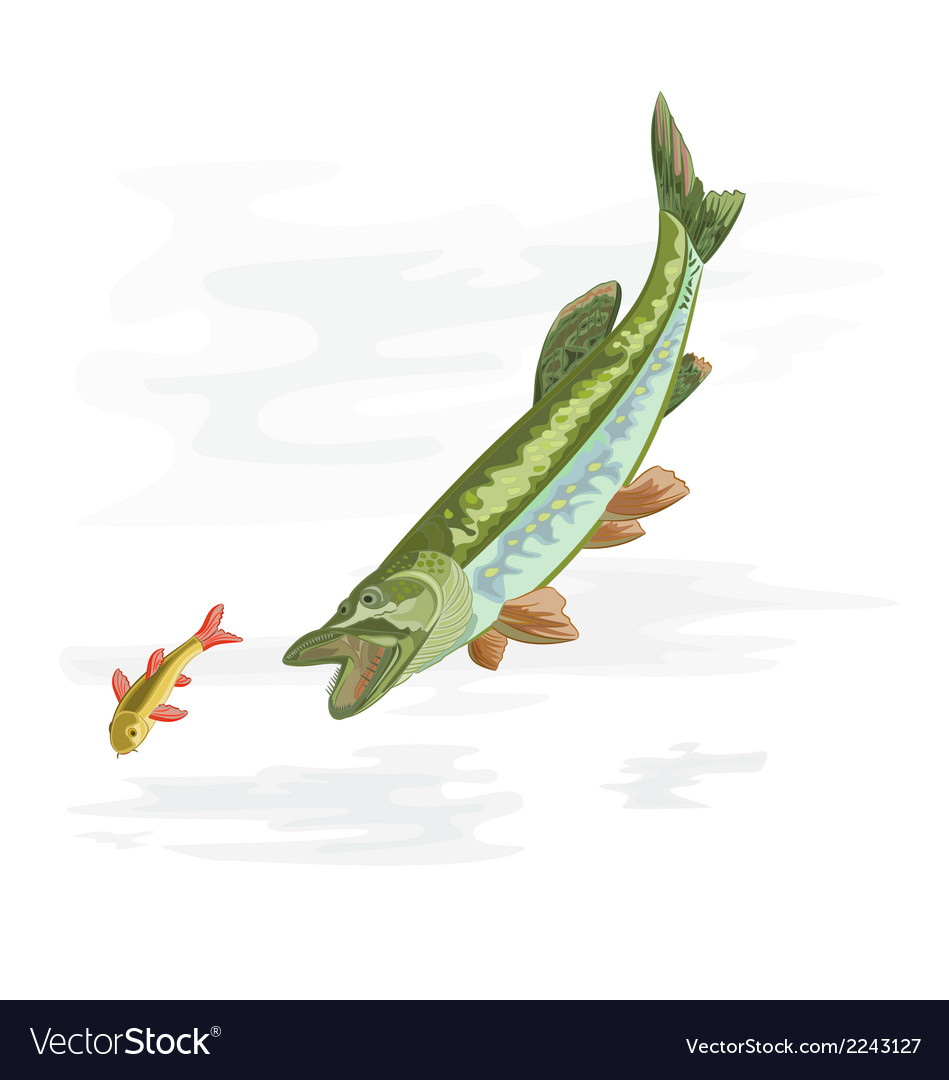 Predatory-fish-pike vector | Price: 1 Credit (USD $1)