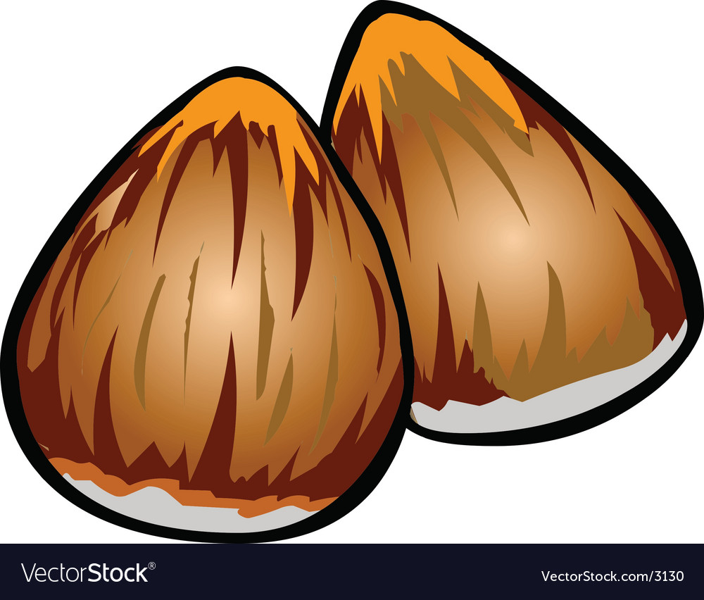 Delicious hazelnut vector | Price: 1 Credit (USD $1)