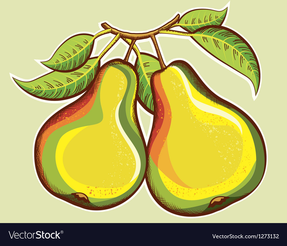 Pears vector   Price: 3 Credit (USD $3)
