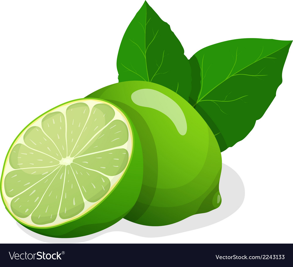 Fresh limes vector | Price: 1 Credit (USD $1)
