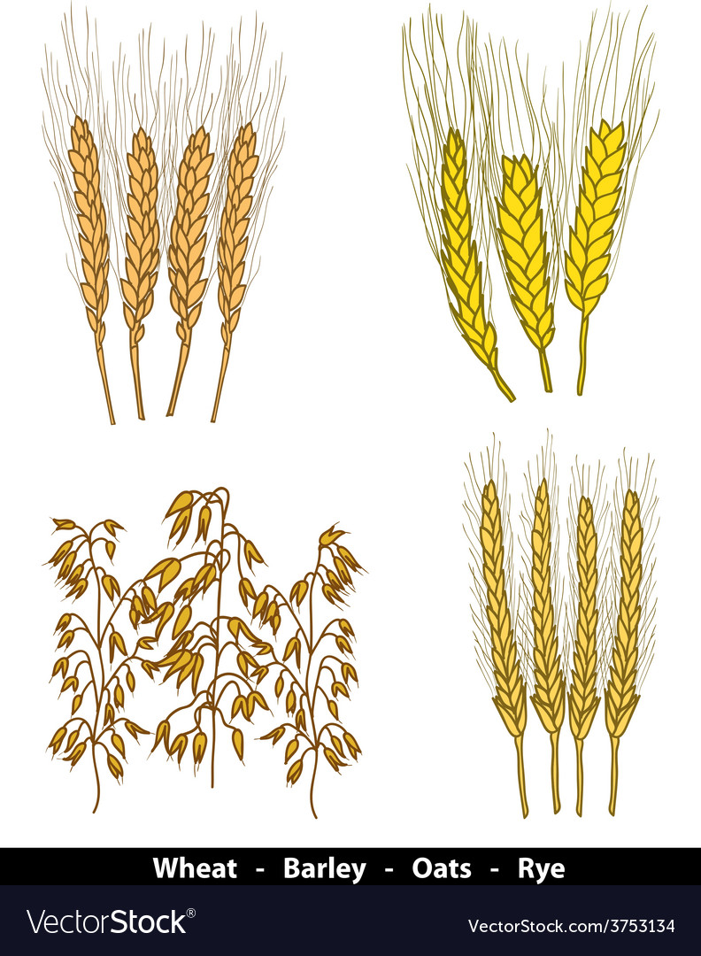 Cereals vector | Price: 1 Credit (USD $1)
