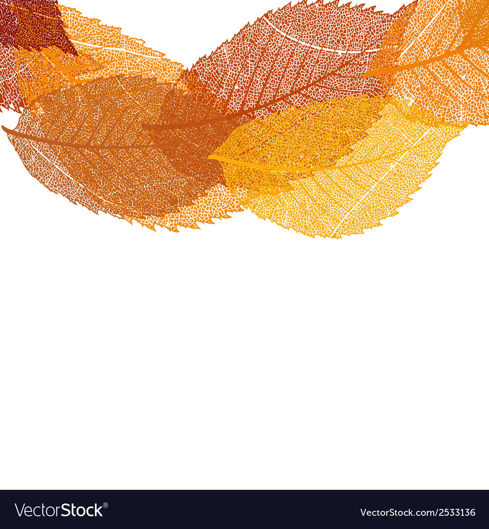 Dry autumn leaves template eps 10 vector | Price: 1 Credit (USD $1)