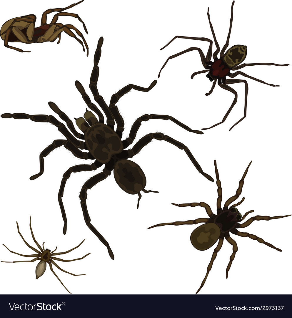 Spider set vector | Price: 1 Credit (USD $1)