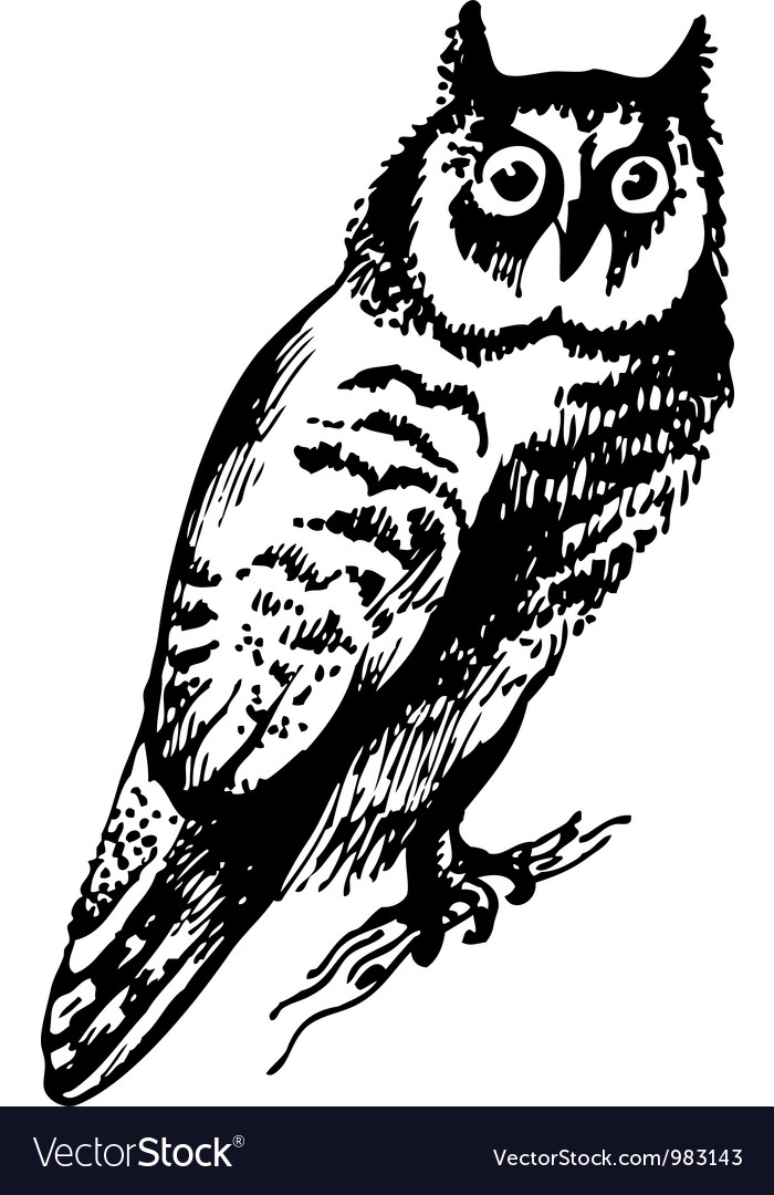 Owl bird vector | Price: 1 Credit (USD $1)